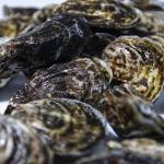 ostras-del-pinillo
